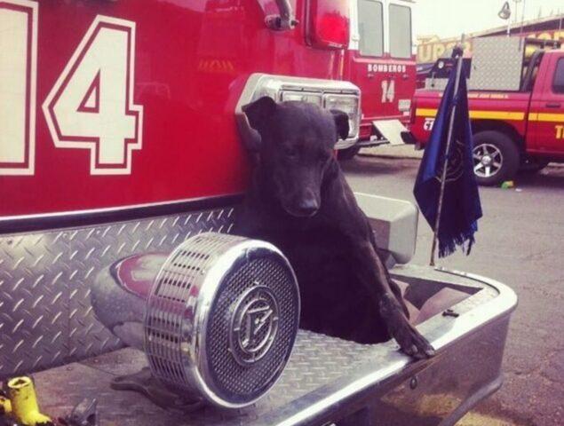 cane dei pompieri