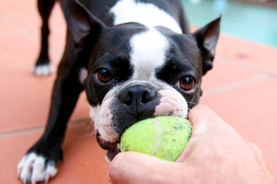 cane e pallina