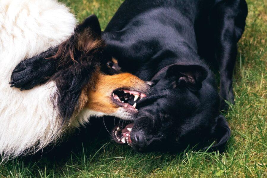 cani che litigano