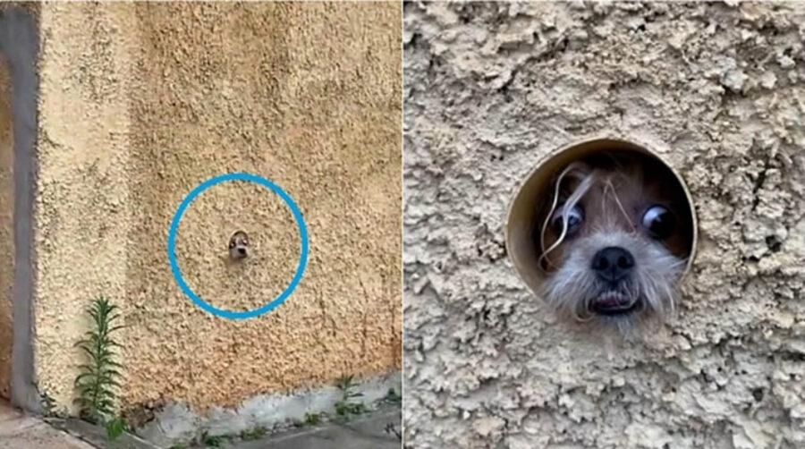 faccia di un cane esce dal tubo