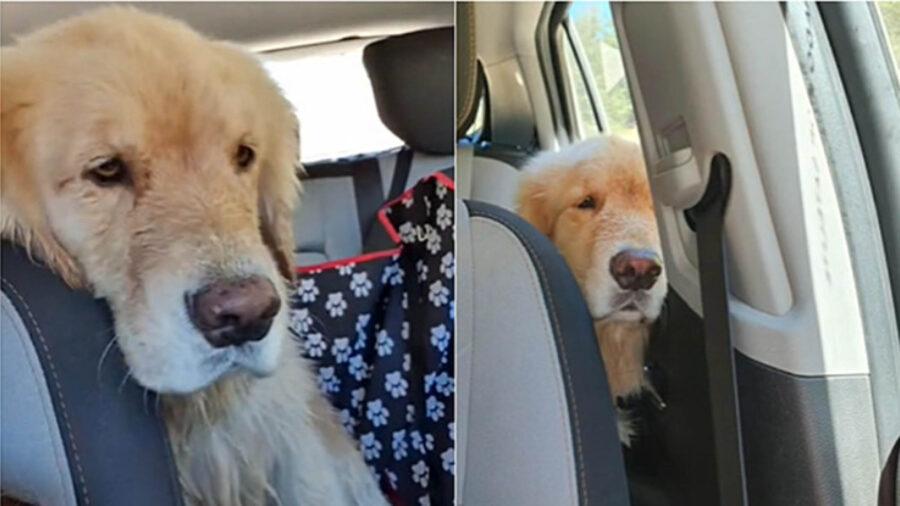 cane seduto in auto