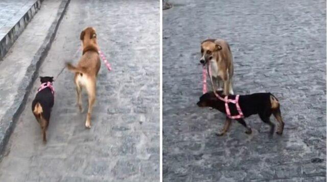cucciolo di cane porta il guinzaglio