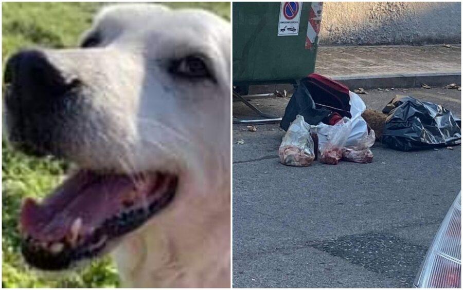 cane ucciso e gettato tra i rifiuti