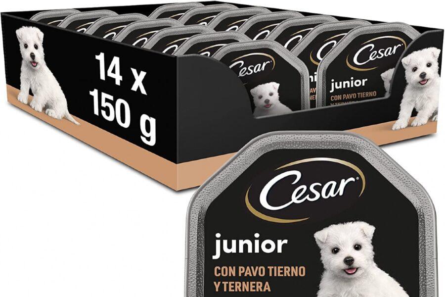 scatole di pappa per cani