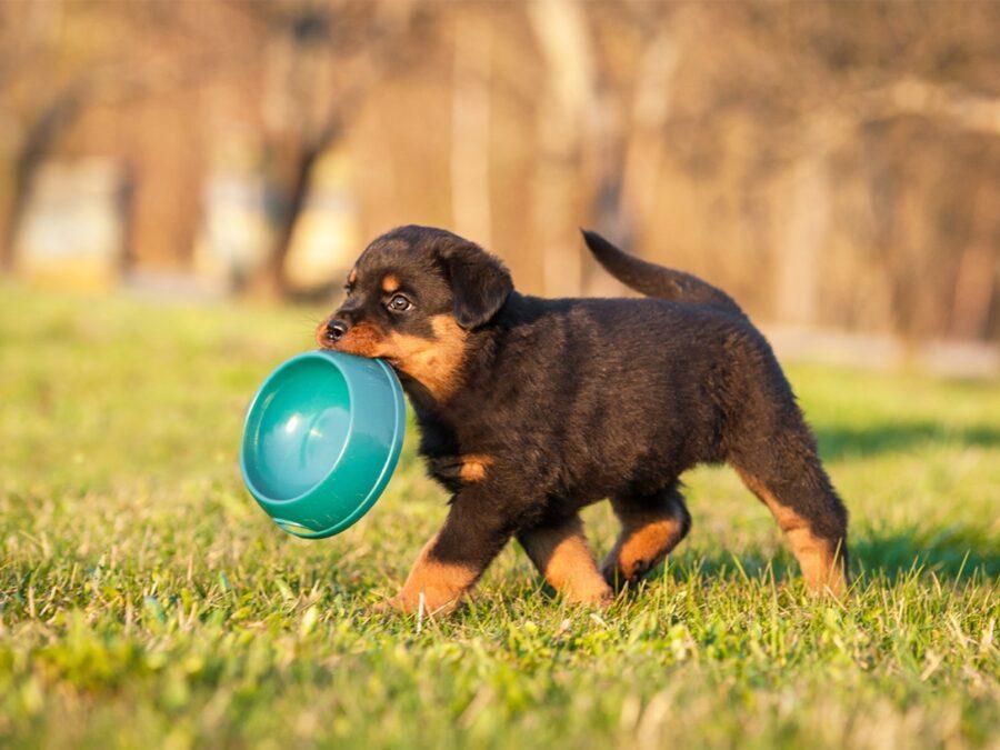 cucciolo di cane con ciotola in bocca