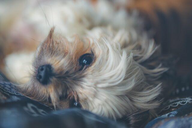 cane che riposa