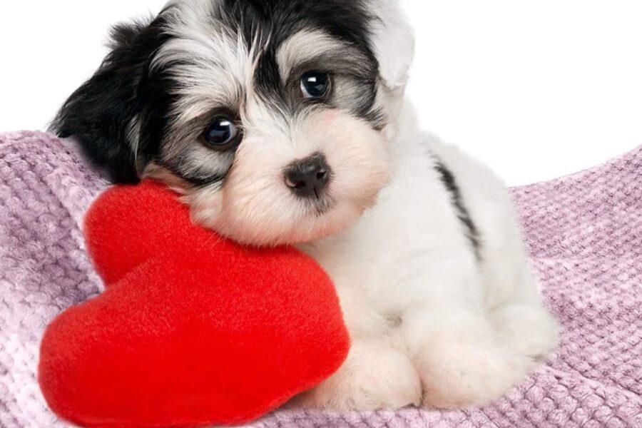 cane e coperta
