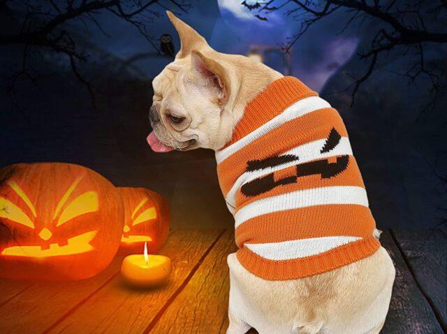 costume per halloween per cane