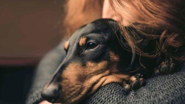 cane nero che abbraccia