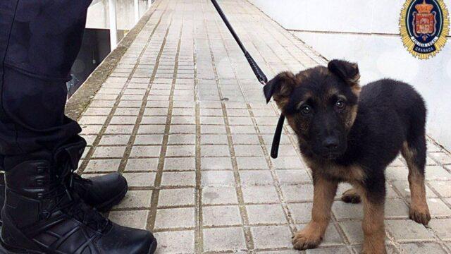 cucciolo poliziotto felice