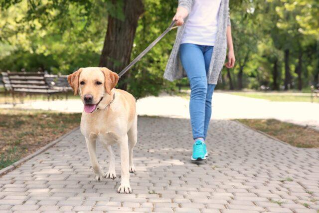 cane cammina con padrona