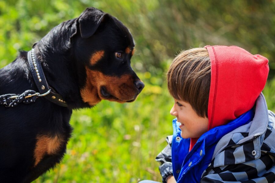 cane nero guarda un bambino