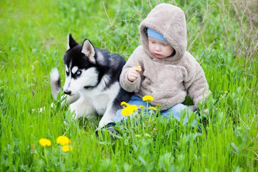 cucciolo di cane con un bambino piccolo