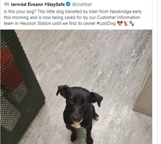 cane piccolo scomparso