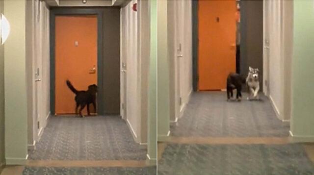 cani giocano nel condominio