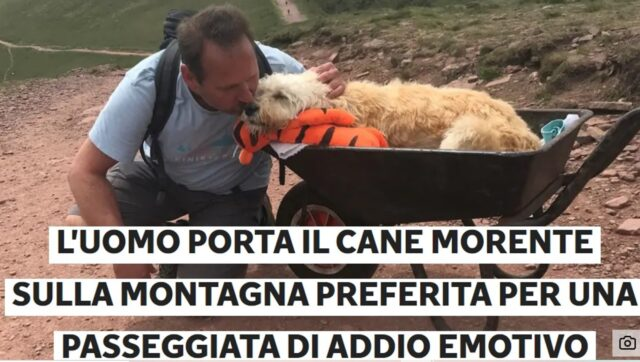 cane abbraccia padrone
