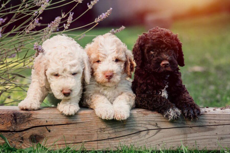 cuccioli di cane su tronco