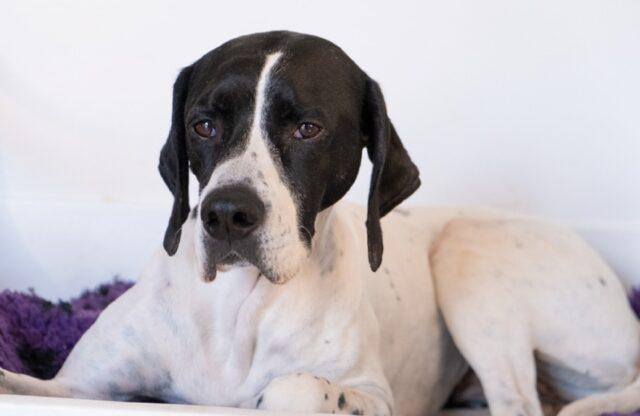 scomparsa cagnolina famiglia disperata