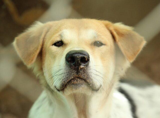 cane nome zeus scomparso 9 mesi