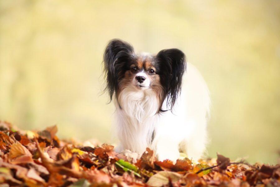cane su foglie secche