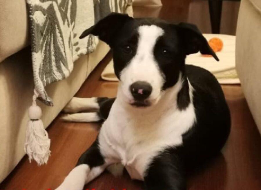 emma cagnolina striscia bianca viso