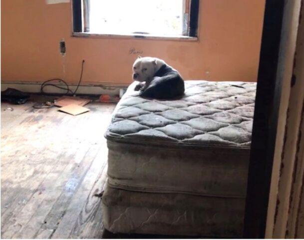 cane su un materasso