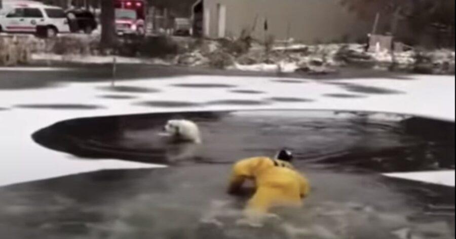 pompiere salva cane che affoga