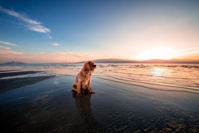 cagnolino sulla riva