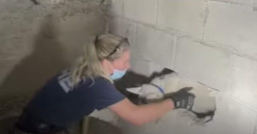 donna salva cucciolo