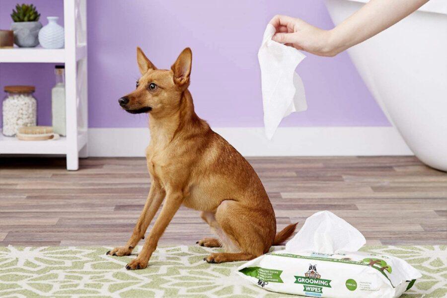 pulizia del cane