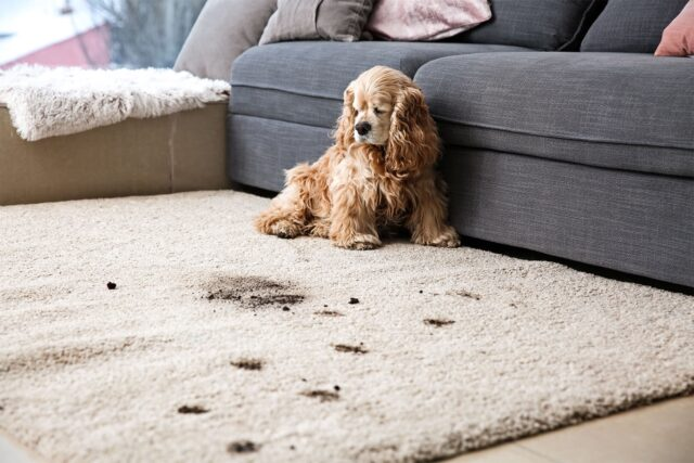 cucciolo di cane tornato dal giardino
