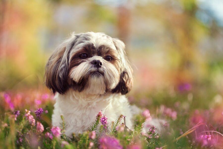 cane in mezzo alla natura