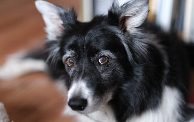 stagno novità su cane già scomparso